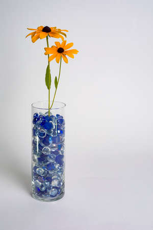 Two Black-eyed Susans in a glass vase filled with blue beads against a white backdrop. 版權商用圖片 - 152334767