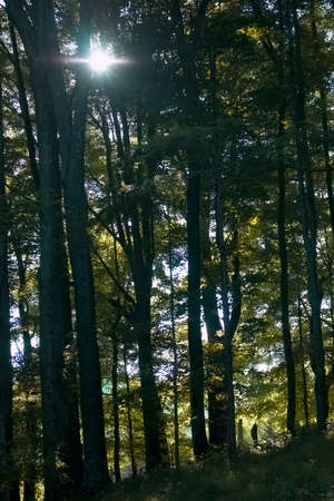 Evening sunlight filters through the forest canopy at Elk Knob State Park in Ashe County, NC. 版權商用圖片 - 152335018