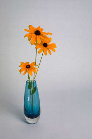 Three Black-eyed Susans in a blue glass vase against a white backdrop.