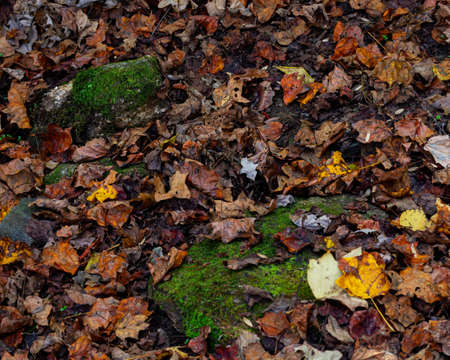 Wet fallen leaves are strewn on the forest floor.
