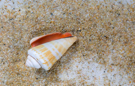 Overhead view of a cone seashell laying on sand.