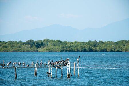 el: Pelicans enjoying the sun, perched on some remnants of a water restaurant near Cordincillo at El Paz in El Salvador