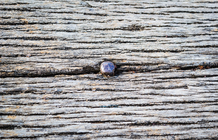rusty nail: Rusty Nail in old Wood