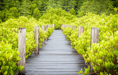 Wood bridge in mangrove forest, Rayong