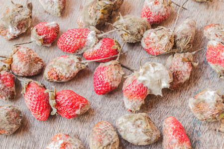 Rotten strawberries on wooden table Stock Photo