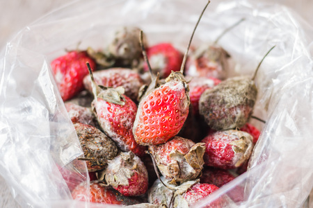 Rotten strawberries in plastic bag