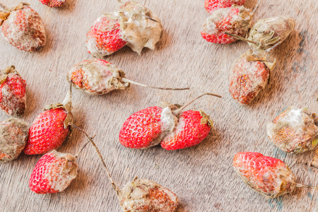 uneatable: Rotten strawberries on wooden table Stock Photo