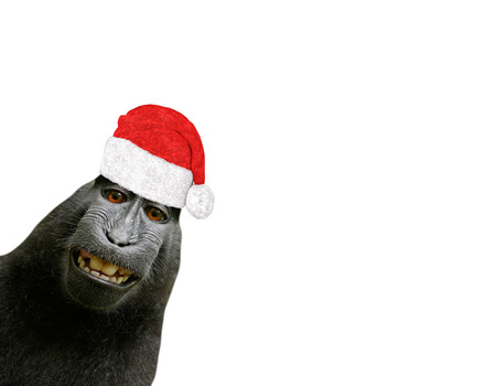 funny christmas chimpanzee monkey smiling and wearing a santa claus hat isolated on a white background Archivio Fotografico