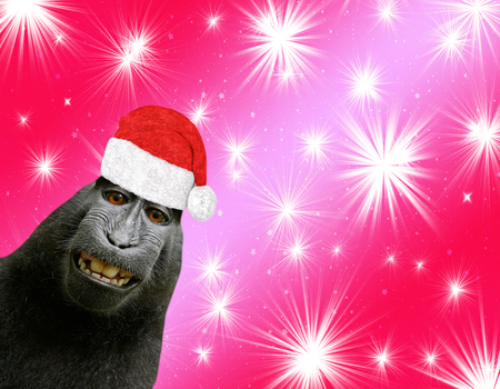 hilarious and funny chimpanzee monkey smiling and wearing a santa claus hat isolated on a red christmas background with shiny stars Фото со стока