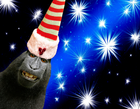 funny smiling chimpanzee monkey wearing a elf hat isolated on black and blue christmas background with shiny stars Фото со стока