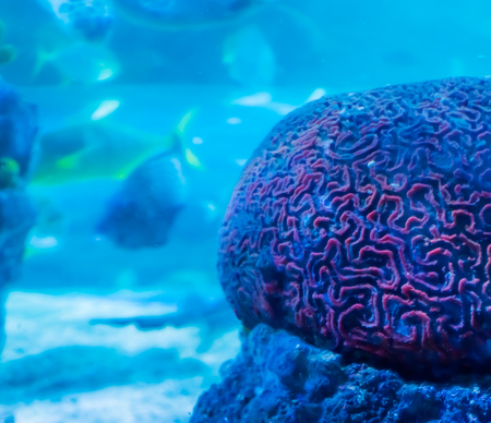 amazing beautiful underwater aquatic sea landscape background of a red brain coral in close up with swimming fish in the background Zdjęcie Seryjne