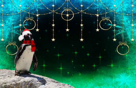 merry christmas a funny penguin wearing a scarf and santa claus bonnet isolated on a decorated background with stars and frozen snow flakes