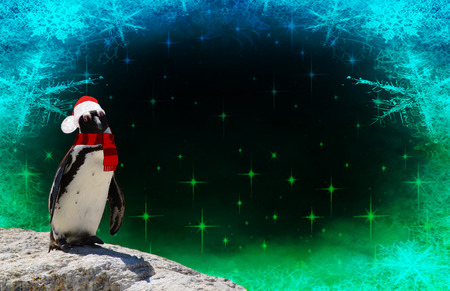 Merry christmas a funny penguin dressed in a shawl and santa claus bonnet isolated on a frozen background with snow flakes and stars