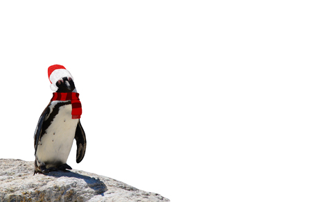 Merry christmas a funny african penguin wearing a scarf and santa claus hat isolated on a white background 스톡 콘텐츠
