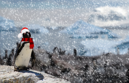 Winter season concept a funny penguin standing on a rock wearing a santa claus hat and scarf while snowing and a family of penguins Stock Photo
