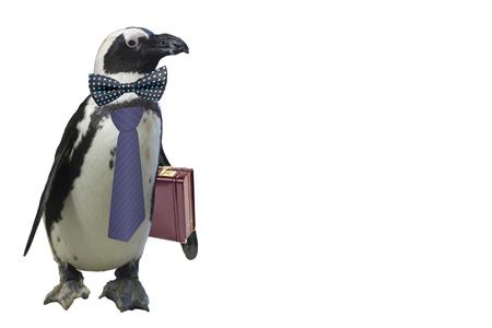funny business or school teacher penguin concept isolated on a white background Reklamní fotografie