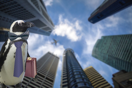 Business concept of a funny penguin wearing a tie and suitcase standing under some big sky scraper building and airplane flying by Reklamní fotografie
