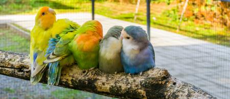 famille aimante de petits perroquets assis près les uns des autres et se blottissant sur une branche Banque d'images