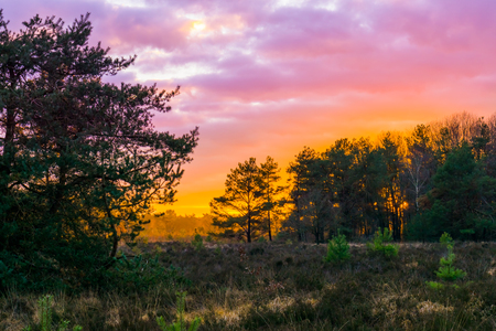 sunset in a forest heather landscape with polar stratospheric clouds, a rare weather phenomenon that colors the sky pink