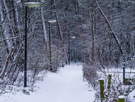 beautiful snowy forest road with unlit lampposts, winter season in the woods, snow forest scenery Stok Fotoğraf