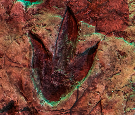 theropod footprint, fossil of a dinosaur track, animals that lived in the jurassic period