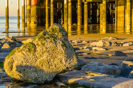 Stone covered in seaweed on the beach with jetty poles in the background, summer season background 스톡 콘텐츠