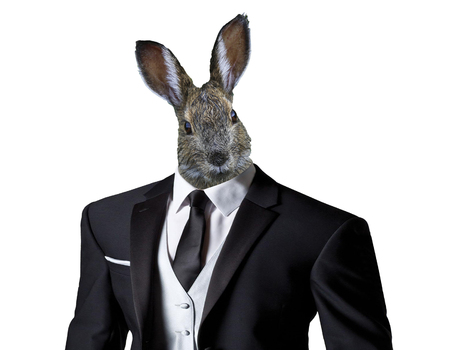 funny easter bunny wearing a business suit, isolated on a white background, easter celebration concept