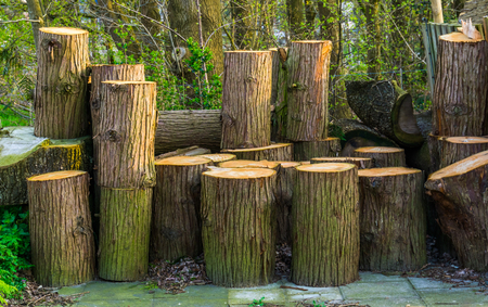 accumulation of wooden tree trunks, natural background, timbered wood Reklamní fotografie - 121661929