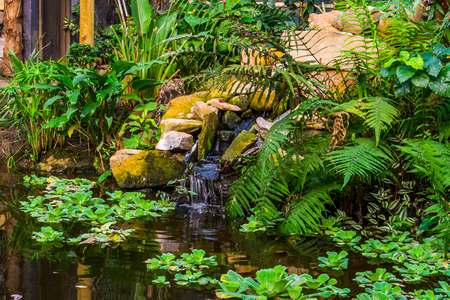beautiful garden architecture, water pond with a waterfall and tropical plants, nature background of a exotic garden