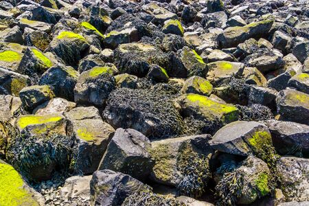 many sea rocks covered in seaweed at the beach of tholen, Nature background