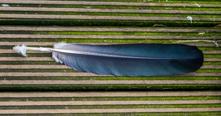 closeup of a tropical bird feather, plumage of a exotic specie