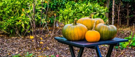 closeup of orange and green pumpkins on a garden table, halloween and autumn background, Traditional holiday decorations