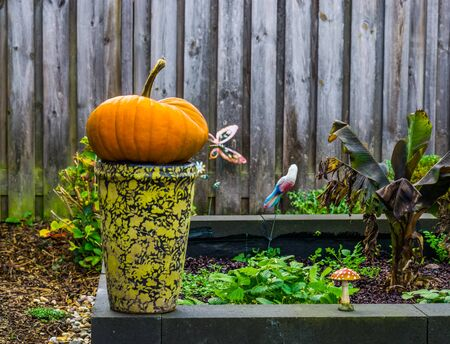 Autumn and halloween decorations, orange pumpkin on a vase in a garden, Seasonal holiday background
