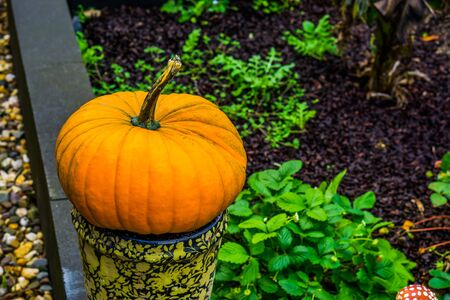 closeup of a orange pumpkin on a vase in a garden, Outdoor halloween decorations, holiday tradition in autumn Banque d'images - 130817232