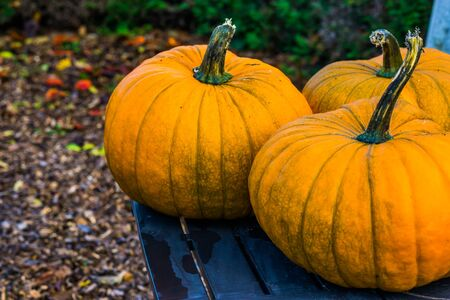 closeup of orange halloween pumpkins on a table, Autumn and holiday decorations, seasonal tradition