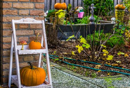 Autumn season garden, Traditional halloween and fall decorations, seasonal background