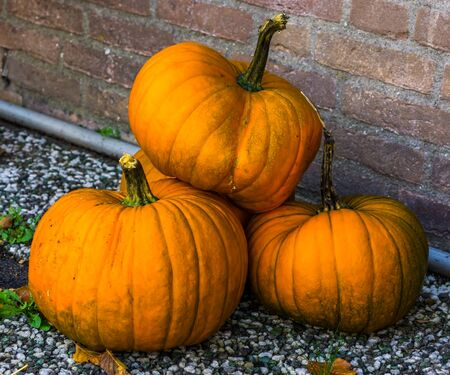 stack of orange pumpkins, traditional halloween and autumn decorations, seasonal background Banque d'images - 130817290