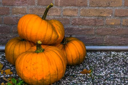 pile of orange pumpkins in closeup, traditional halloween and autumn decorations, Seasonal background Stockfoto