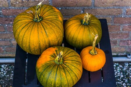 orange with green pumpkins on a garden table, outdoor decorations for halloween and autumn, seasonal tradition Banque d'images - 130817294