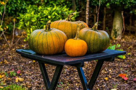 autumn and halloween season background, green with orange pumpkins on a table in a garden, Traditional decorations