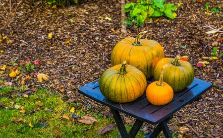 traditional halloween and autumn decorations, green with orange pumpkins on a garden table, seasonal background Banque d'images - 130817297