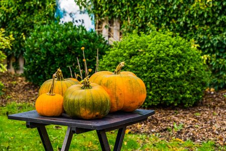 halloween and fall background, Green with orange pumpkins on a garden table, Seasonal holiday background