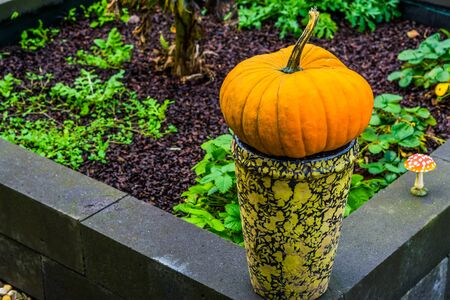 orange pumpkin on a vase in closeup, Traditional halloween and autumn decorations, Seasonal holiday background