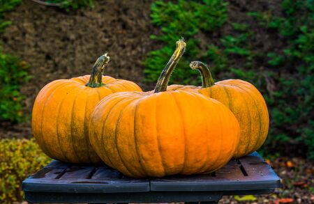 orange halloween pumpkins on a table, Autumn and holiday decorations, seasonal tradition