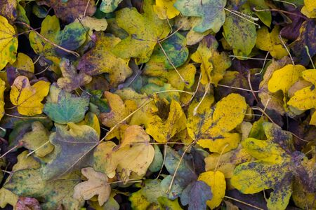 pattern of fallen leaves in diverse colors, Autumn season Background