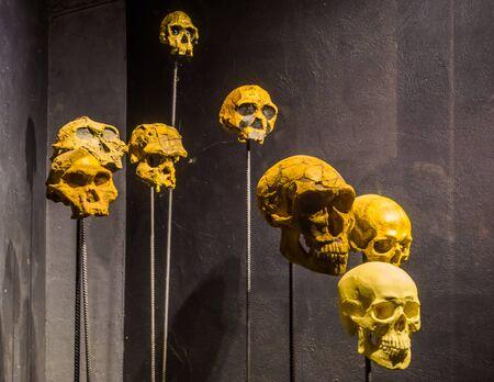 Primaten- und Menschenschädel auf Pfählen, gruseliger Halloween-Hintergrund