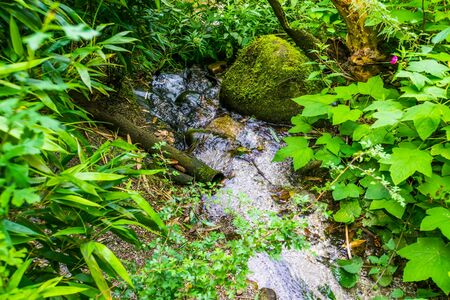 streaming water over rocks in a tropical garden, exotic nature background