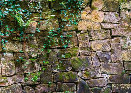 Beautiful vintage stone wall with plants and leaves, Garden architecture, stone pattern background