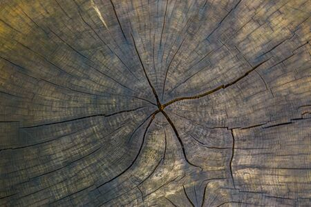 old tree section with annual rings and cracks, wooden pattern, nature background