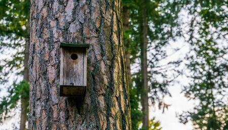 Wooden bird house hanging in a forest, nature background